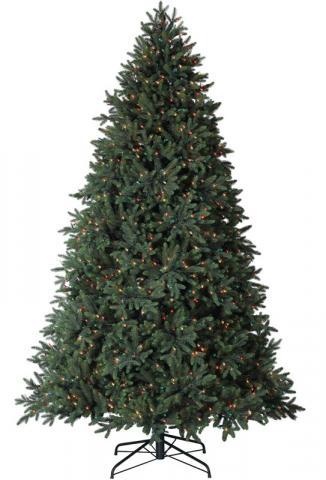 Colorado Mountain Spruce