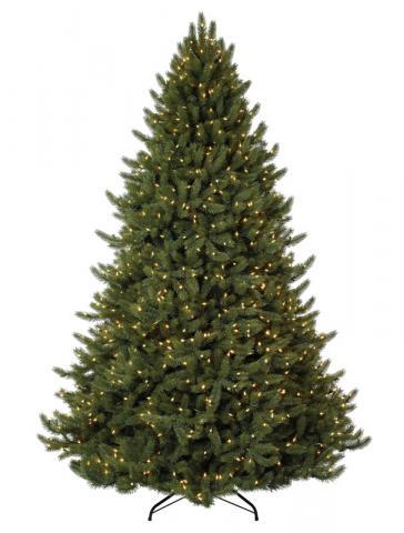 Vermont White Spruce