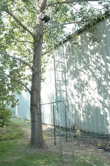 Kong Maxx Ladder Stands Sold At Gander Mountain Recalled